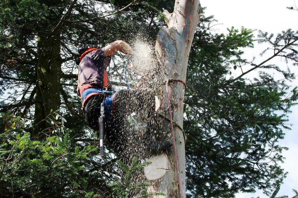 Prix elagage arbre fruitier for Prix de l elagage d un arbre