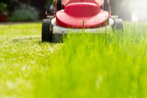 Prix tonte de pelouse