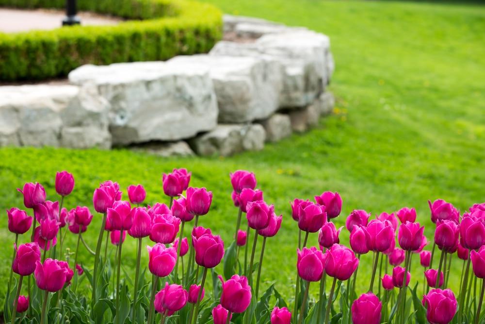 Enrochement décoratif dans un jardin