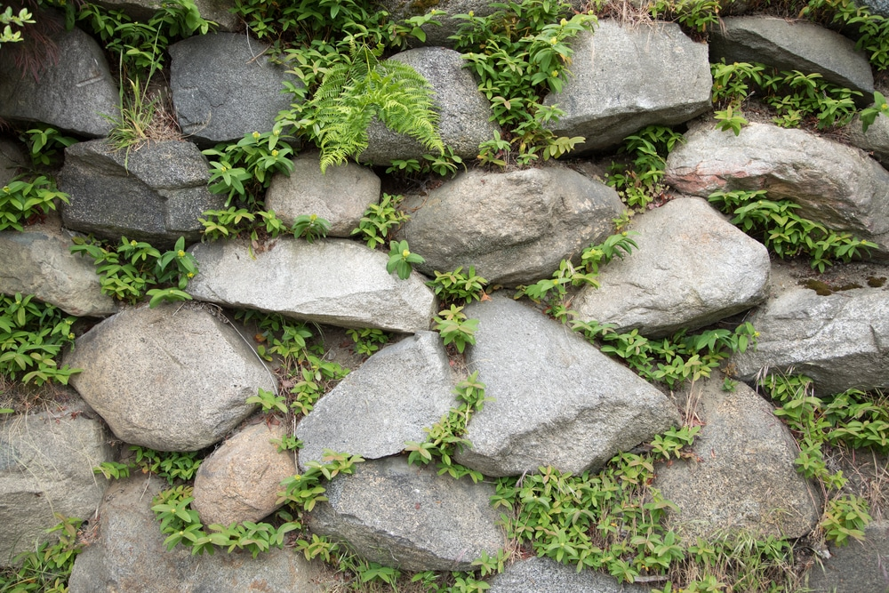 Enrochement paysager - enrochement végétalisé